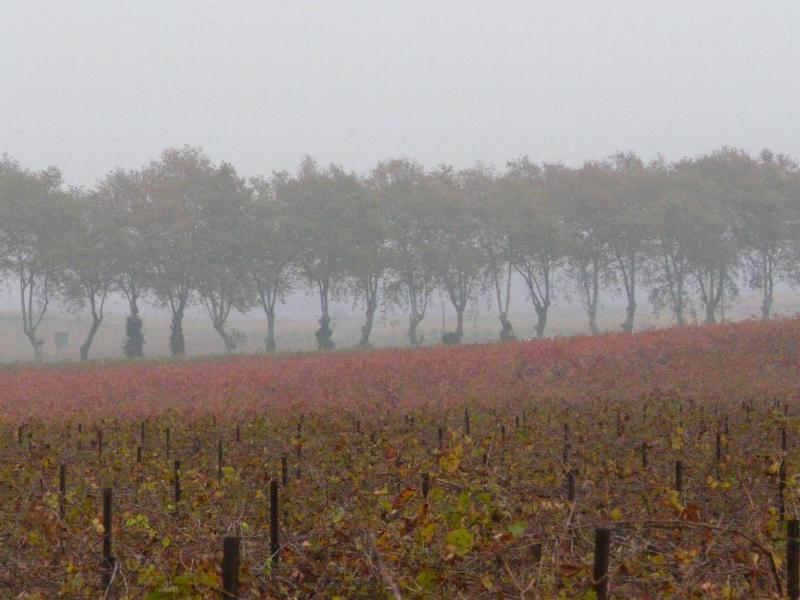 Vignes d'automne et Canal du Midi