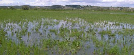 25/08 : On ne remblaie pas les zones humides du littoral